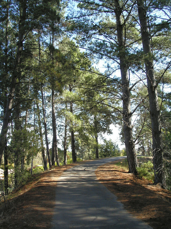 20060325_1547_0197 Maroondah Aqueduct bicycle trail.