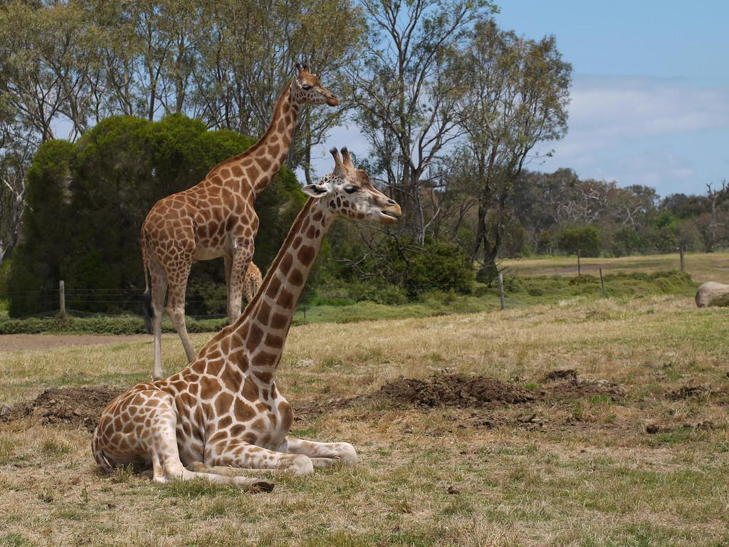 20131227_1308_1261 Werribee Zoo
