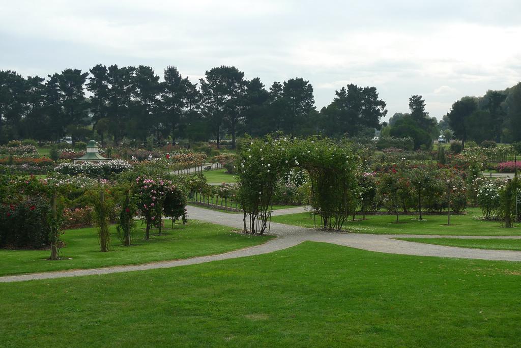 20120419_1315_0597 State Rose Garden, Werribee