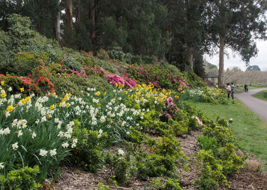 20130914_1553_2786 National Rhododendron Gardens, Olinda