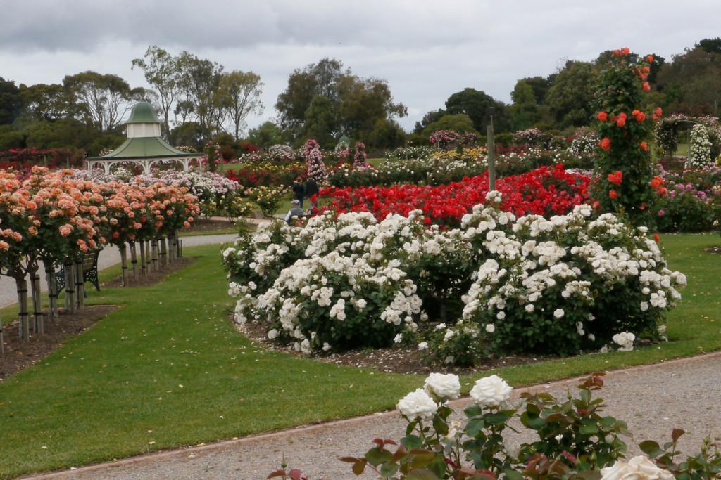20121117_0950_4786 State Rose Garden, Werribee