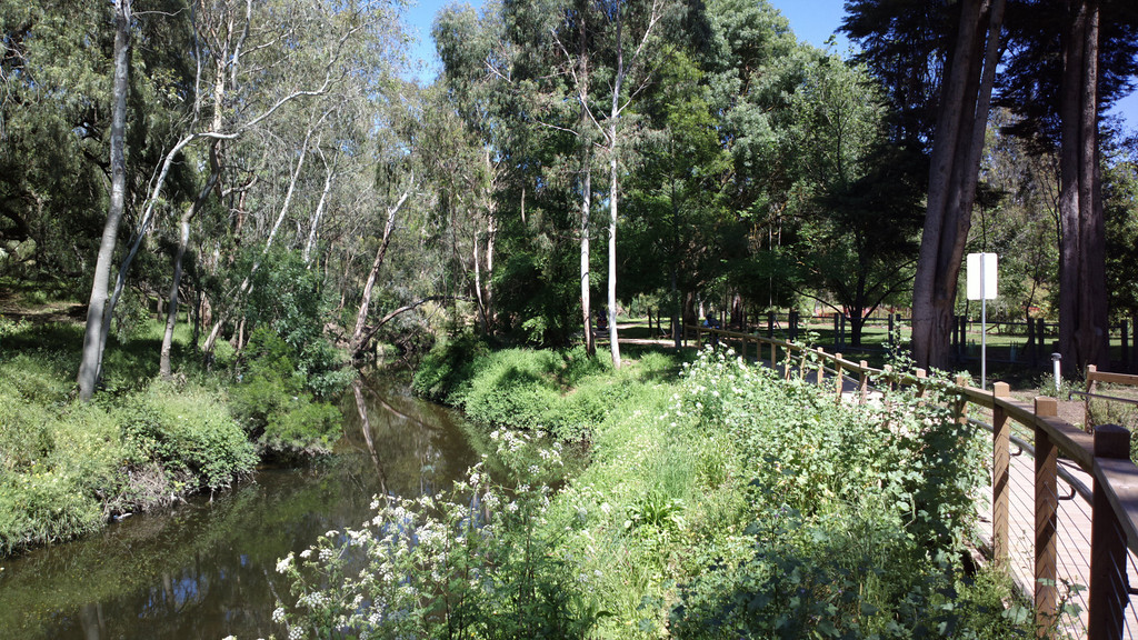 20131105_1110_0280 Darebin Creek (just north of Heidelberg Road)