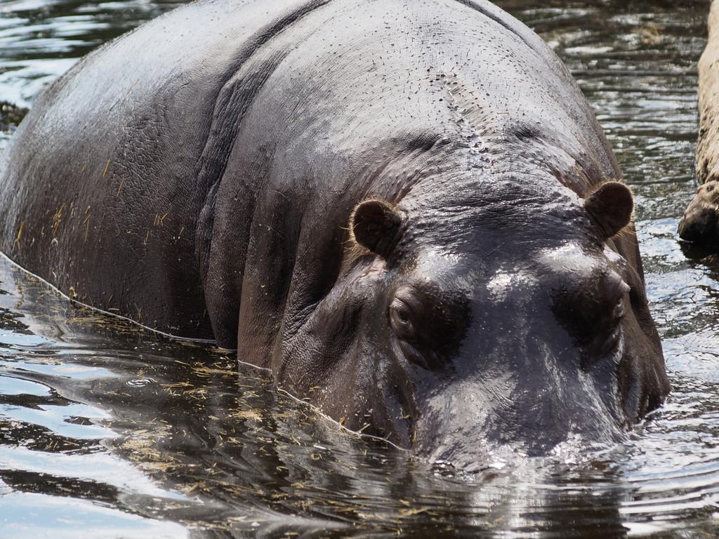 20131227_1345_1250 Werribee Zoo