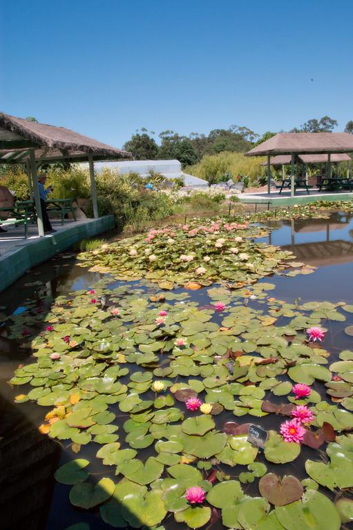 20080103_1222 The Blue Lotus gardens.