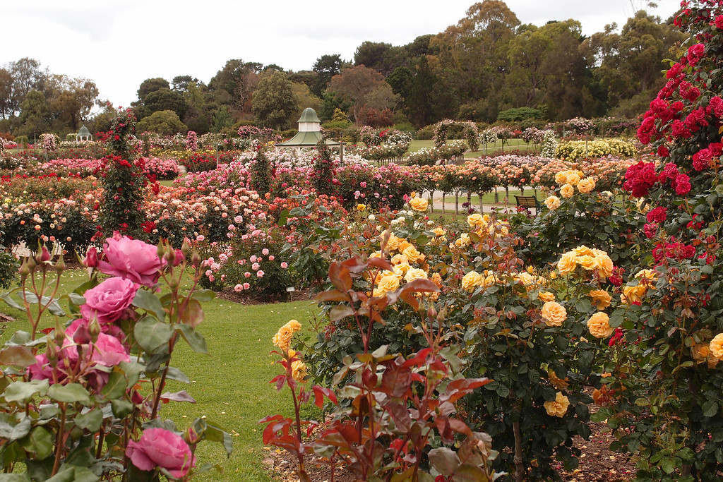 20121117_1039_7201 Werribee Rose Garden