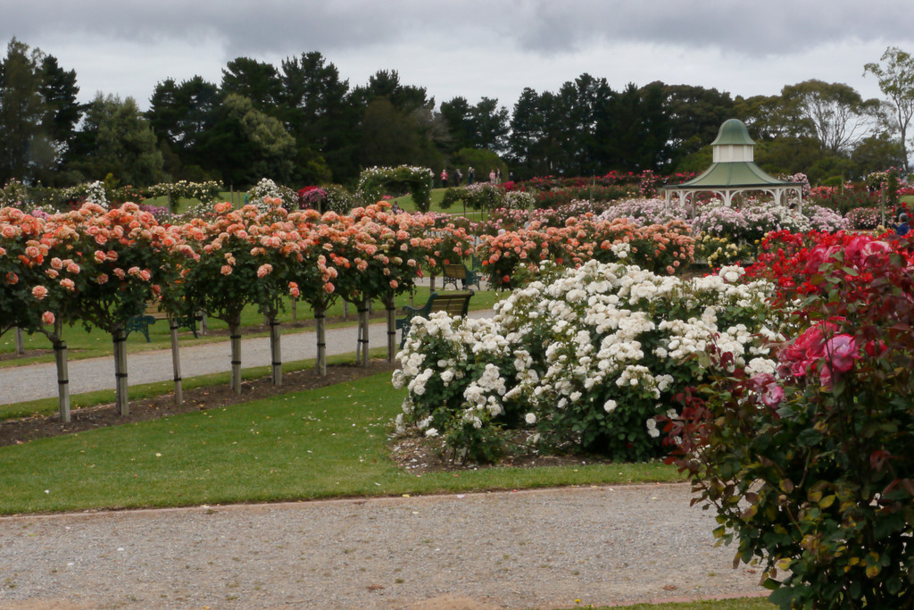 20121117_0952_4789 Werribee Rose Gardens