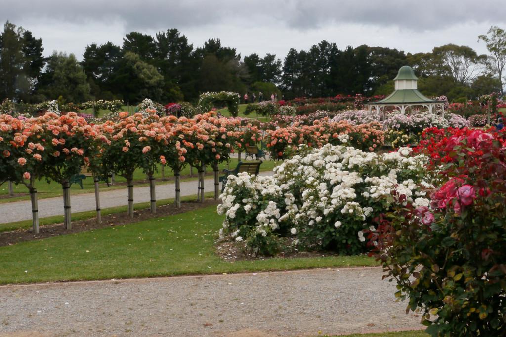 20121117_0952_4789 Werribee Rose Gardens