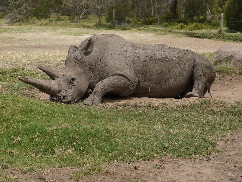 201312227_1311_1279 Werribee Zoo