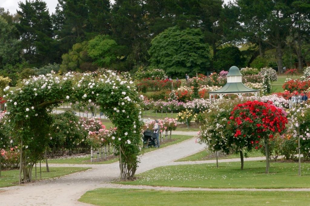 20121117_1103_4836 State Rose Garden, Werribee