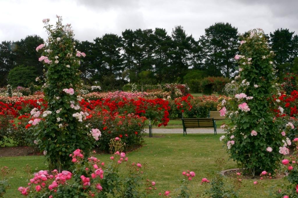 20121117_1032_4819 State Rose Garden, Werribee