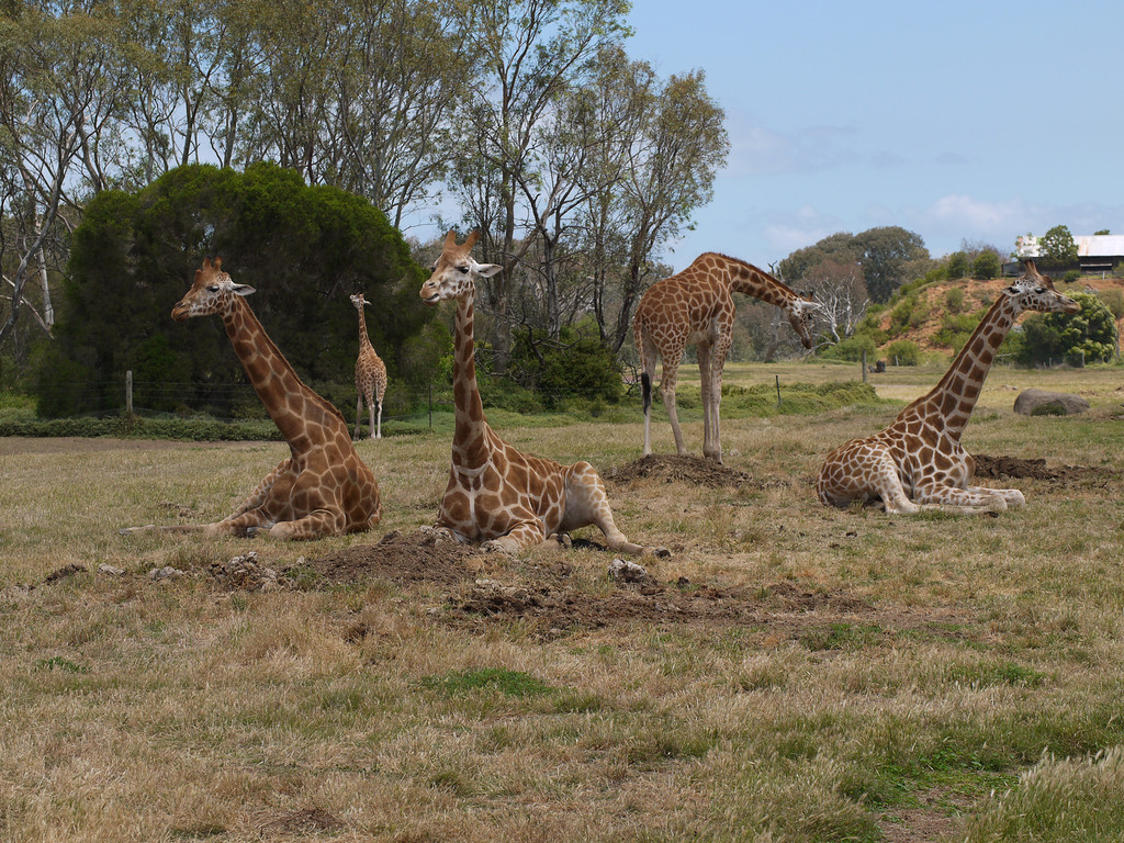 20131227_1308_1256 Werribee Zoo