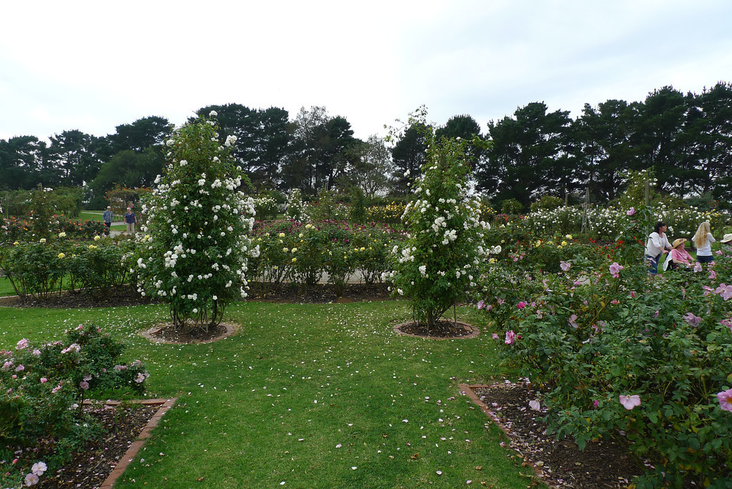 20120419_1304_0590 State Rose Garden, Werribee