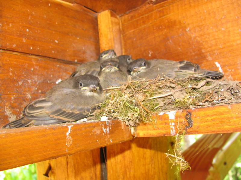 This bird's nest was on our porch.  They are so cute!