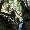 323 Redwoods Pano