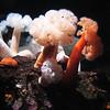 171 Monterey Aquarium