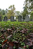 Monticello - Cemetery 06