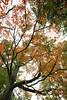 Monticello - Trees in Colour 03