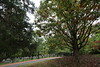 Monticello - Cemetery 22_1