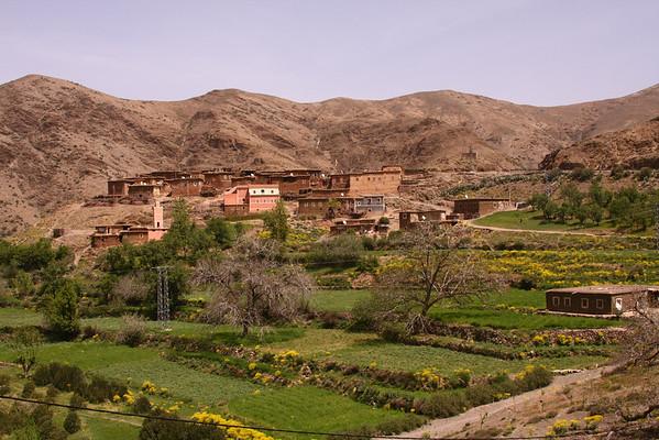 Houses near an oasis.