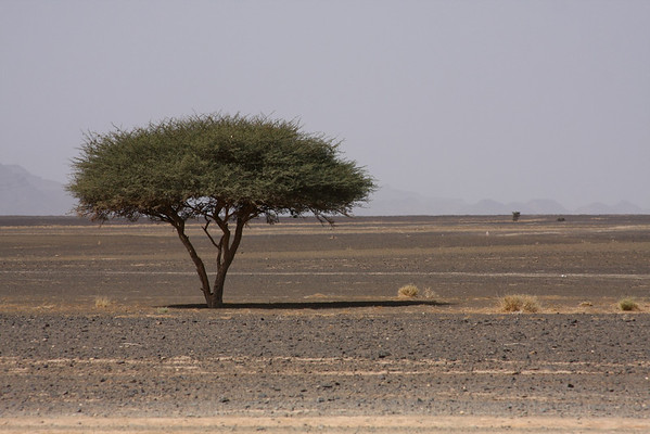 This is the landscape between main road and desert.