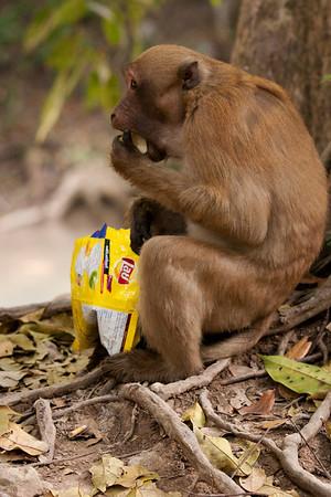 Monkey enjoying a bag of stolen chips.