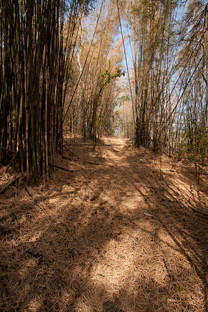 The path I followed disappeared after a while but that didn't stop me. The final part before reaching again a marked road was in very dense bamboo forest.