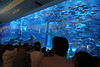 Aquarium in the same mall.