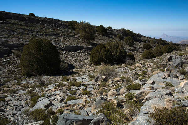 There is still vegetation at almost 3000 meters.