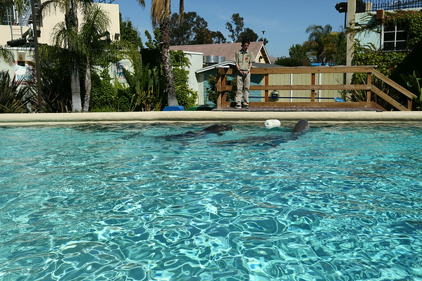 Dolphins between photo sessions with visitors.