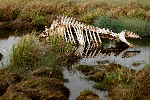 Animal carcass very close to the main path.