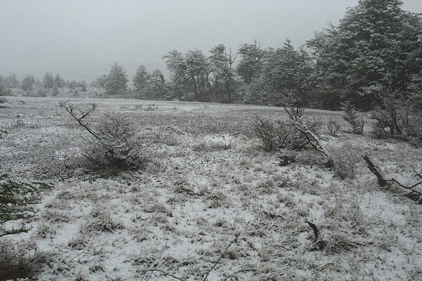 Snow was getting stronger and quickly started to cover the vegetation.