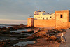 A seagull enjoys the setting sun light falling on the walls of Essaouira.