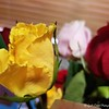 """Sunday, May 14, 2017<br /> <br /> My Beautiful  """"MOTHER'S DAY"""" BOUQUET that arrived on Saturday, May 13, 2017.<br /> <br /> My Homepage: <br /> <br /> www.God'sChild.SmugMug.com"""
