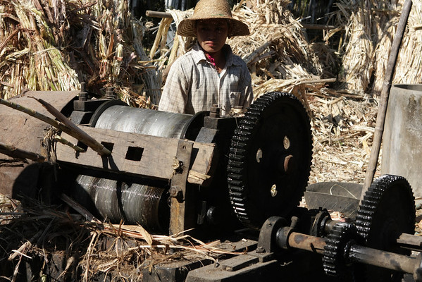 People make sugar at home from sugar cane. This machine is used to press it before being boiled.
