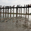 Ducks under U Bein Bridge. People in boats were taking them home.