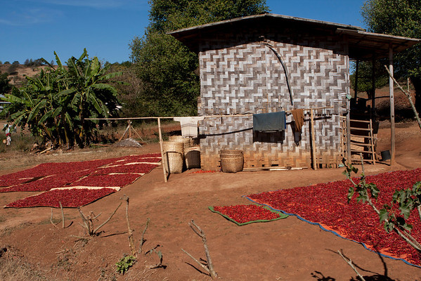Chillies drying in the sun.