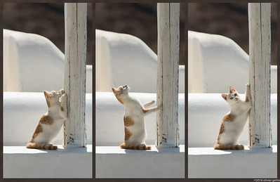 22h02_21092016_chats_triptych