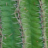 Cactus- Close up.