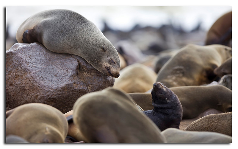 84. Man do i love being a Seal.......................:-)