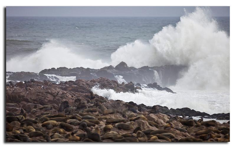 81. Wild Atlantic Ocean and Seals................lots of Seals.
