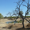 Next morning - first proper view of our camp's waterhole. As its the dry season, most of the wildlife on the reserve and on the neighboring National park has to come to these natural and artificial holes for drinks - hence its reputation as one of the outstanding locations for wildlife viewing.