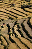 Rice terraces at harvest time.