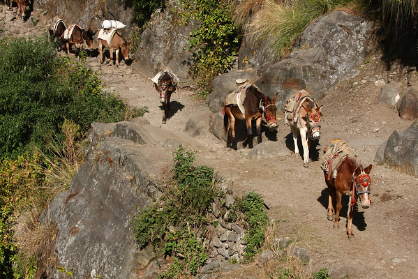 Except for the lower parts of the trail, donkeys are used to transport goods.