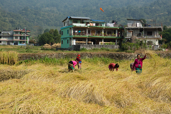 We rented some bicycles and decided to go around the lake. There are some places to sleep outside Pokhara but not many. This is also a good chance to see people working on the rice fields.