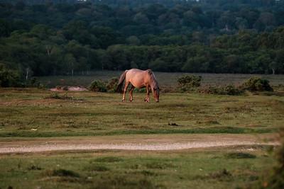 Bronzed Pony