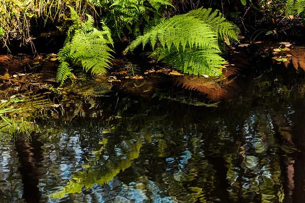 Fern reflection