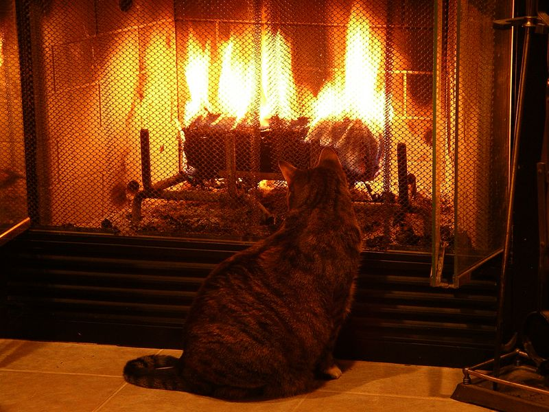 Sassy's New Year, watching the fire.