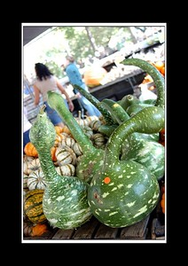 Swan-like vegetables - I was told the name - but got alittle to fascinated by what they looked like...