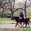 NYPD horses in Central Park