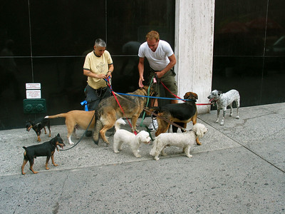 Dog walkers, New York